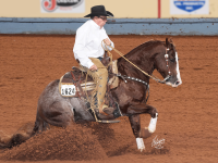 Brother Jackson - AQHA World show